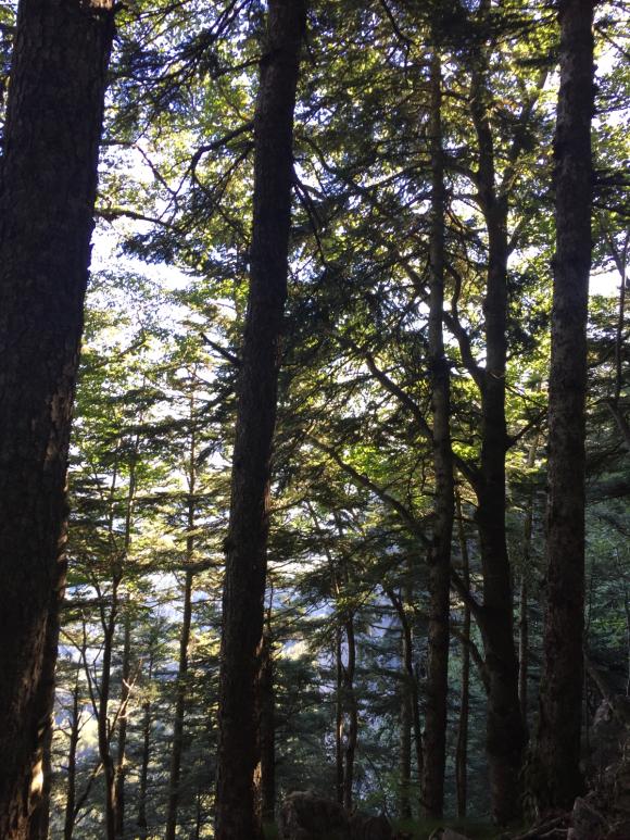 Trees 101