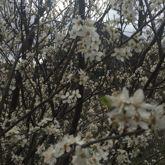 Spring 101