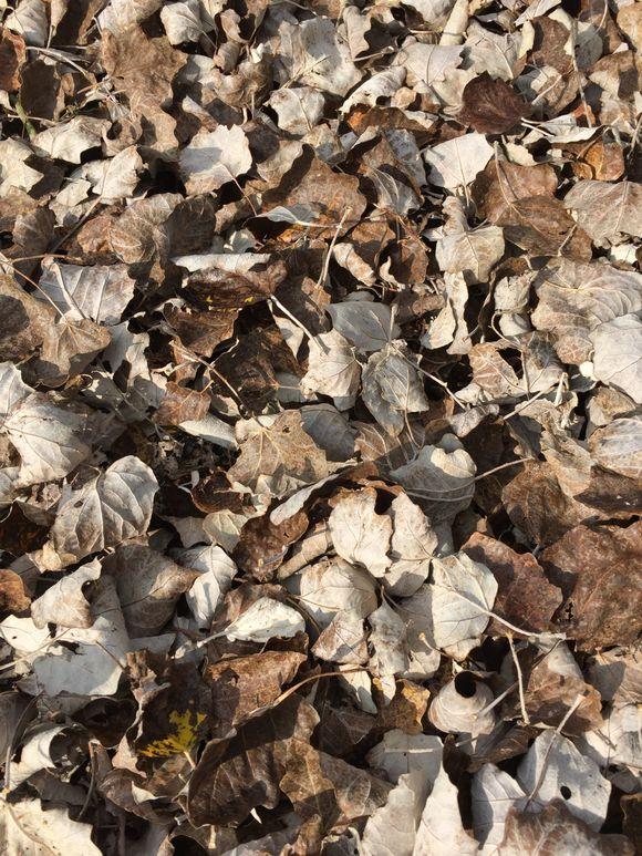 Leaves 101